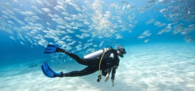 nurkowanie ryby