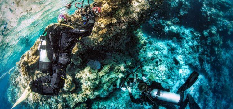 07.06.2019 Warsztaty fotografii podwodnej z Ireną Stangierską