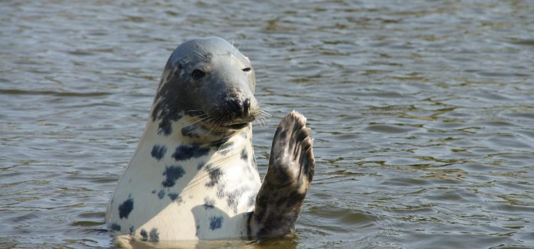 Nurkowanie z fokami – Edynburg